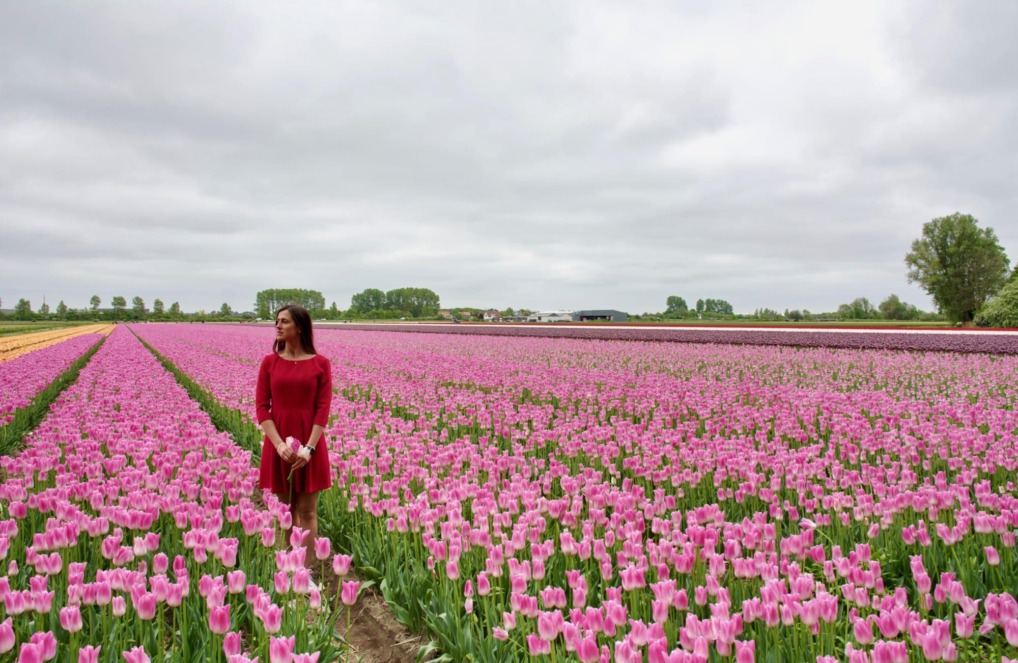 Sulle tracce dei tulipani in Olanda